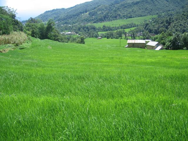 fertile land - photo #3